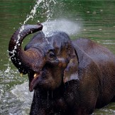 Elephant-sprays-himself-with-water