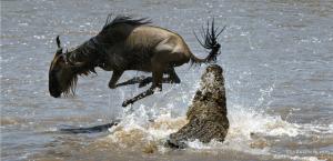 crocodileattack