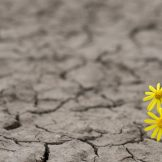image thumbnail link to How to Increase Resilience During Challenging Times
