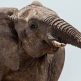 image thumbnail link to Government's 2 Elephants: Compliance and Security