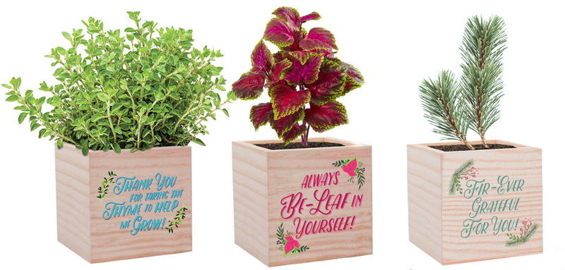 Appreciation Plant Cubes